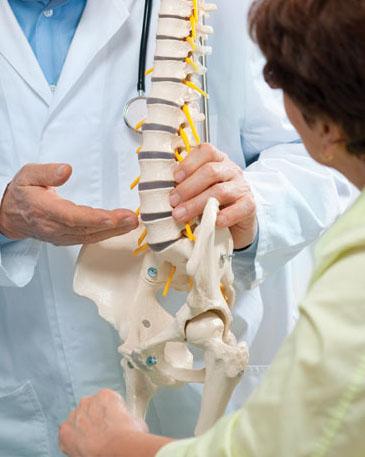 spine-model