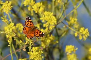 does chiropractic help allergies